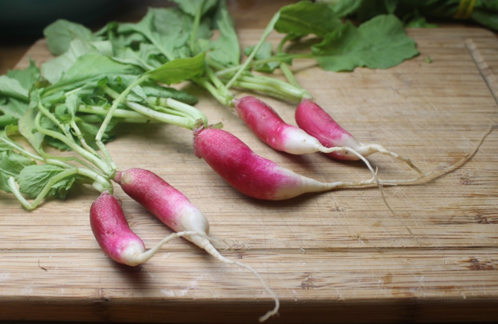 French butter radishes